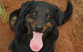 4F dog adoptions