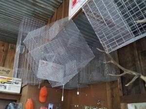 fish traps