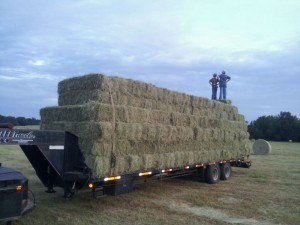 july.hay  300x225 Highlighting Our Hay