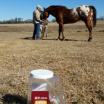 horse treats feb e1422903906239 150x150 February Featured Items of the Month