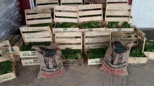 seed potatoes...  </div>   <a href=